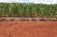 Culture du soja au Paraguay