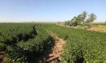 L'économie du Soja au Paraguay