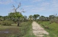 Gran Chaco sud américain, Paraguay