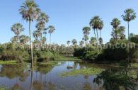 Pantanal Paraguayen