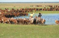 L'élevage au Paraguay