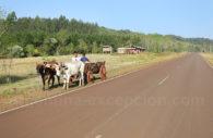 Sur la route, Misiones, Argentine