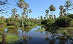 Circuit Safari Chaco Pantanal, Paraguay avec Paraguay Excepción
