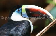 Parc aux oiseaux, Iguaçu, Brésil