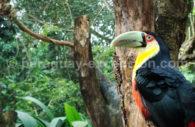 Faune aviaire d'Iguaçu
