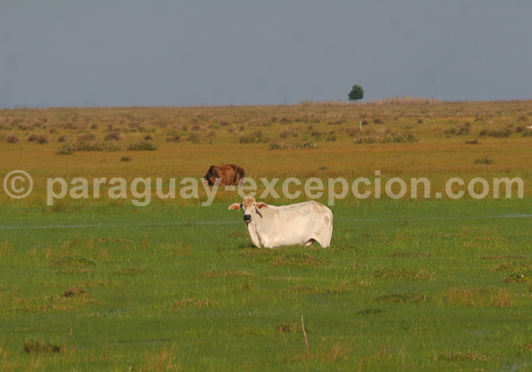Gran Chaco Sud Américain