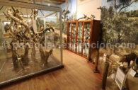 Musée Scientifique Filadelfia Chaco, Paraguay