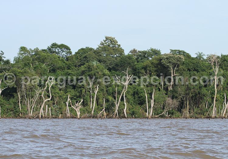 Voyage Pantanal Paraguayen