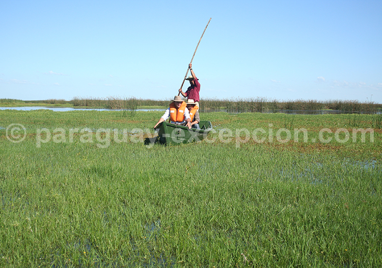 Découverte du Pantanal Paraguay