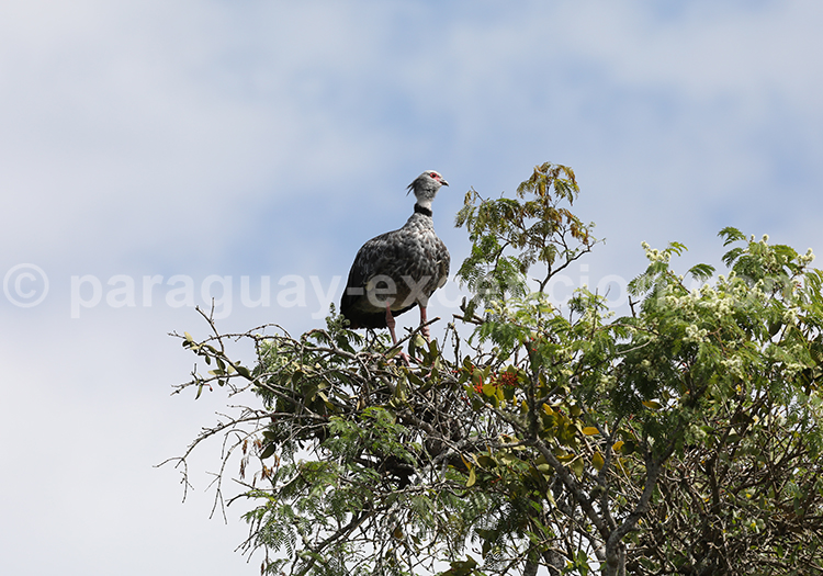 Parc national Rio Negro, Pantanal, Chaco, Paraguay