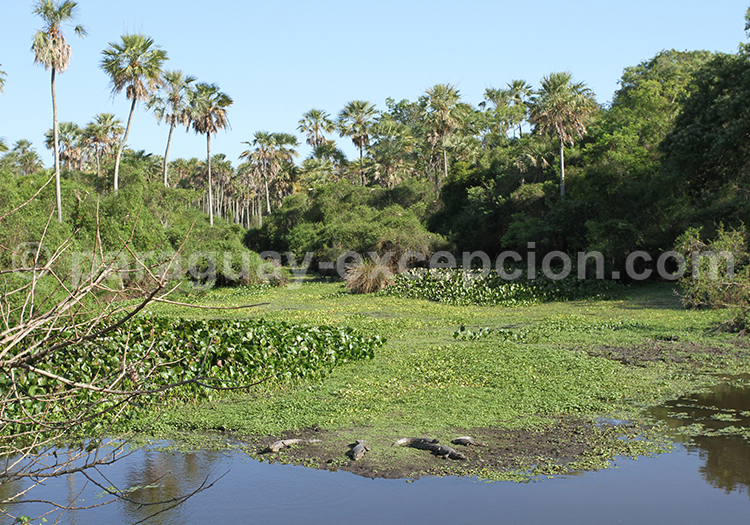 Voyage hors des sentiers battus Paraguay