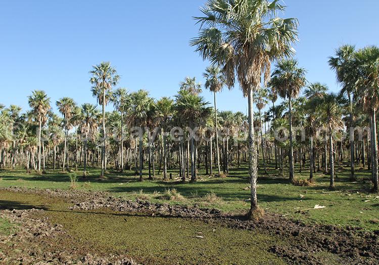 Agence de Voyage francophone Chaco Paraguay