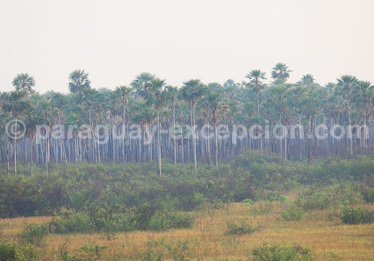 Excursions parc national Rio Negro