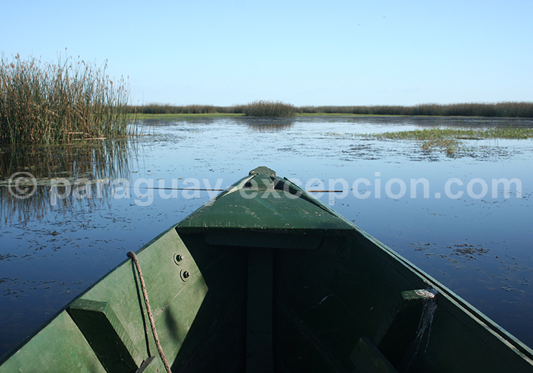 Safari en bateau Pantanal Paraguayen