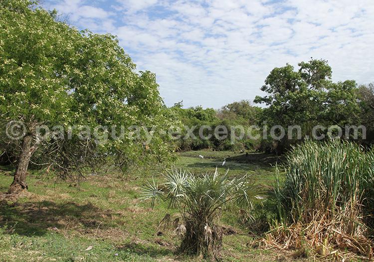 Agence de Voyage sur mesure Chaco Paraguay