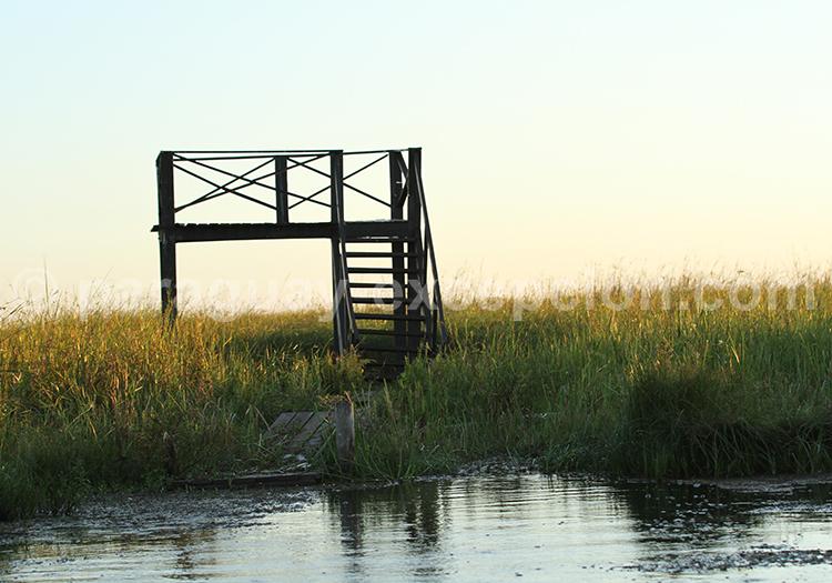 Observation de la faune Pantanal Paraguay