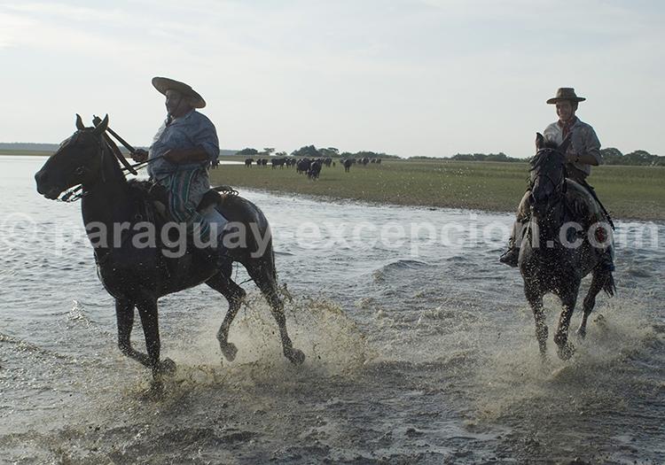 Promenade équestre dans le Pantanal du Paraguay