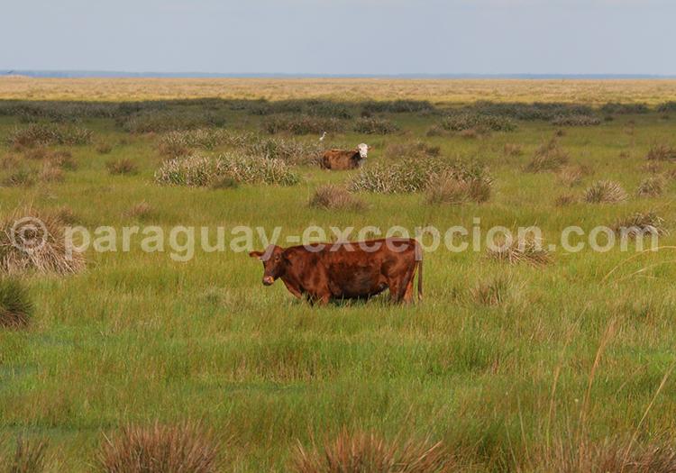 Gran Chaco Argentine Bolivie Brésil Paraguay