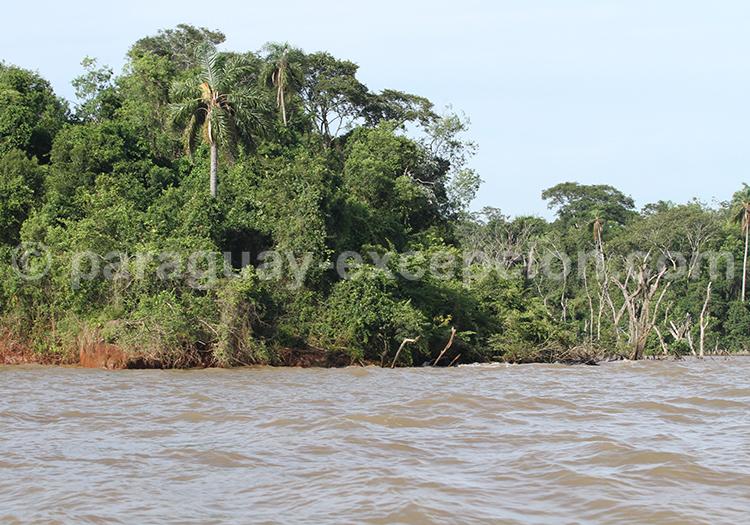 Safarai photographique Pantanal Paraguayen