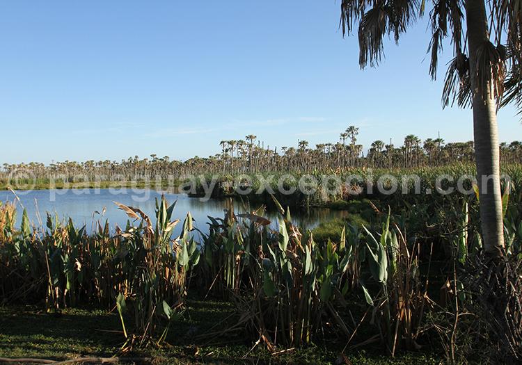 Lagune Chaco Paraguay