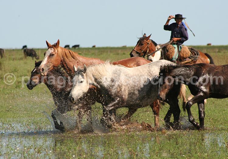 Gran Chaco, Paraguay