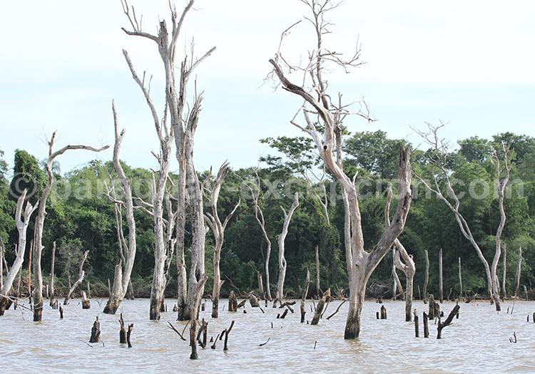 Séjour Pantanal Paraguayen