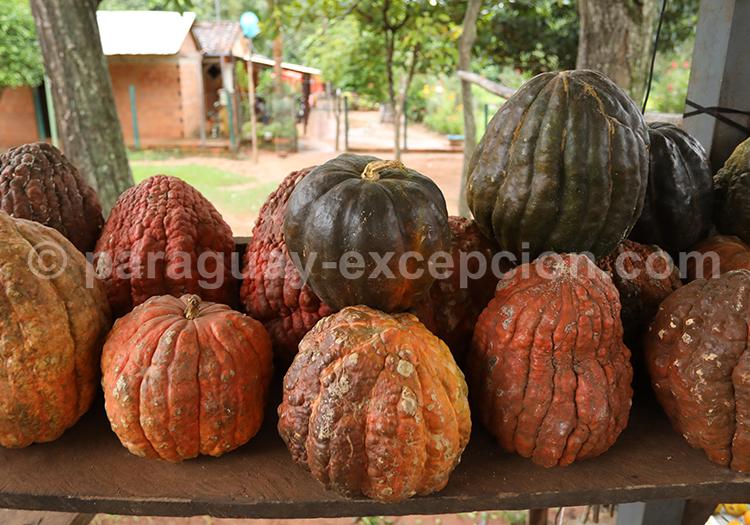 Courges du Paraguay avec Paraguay Excepción