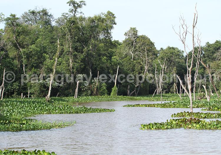 Circuit animalier Pantanal Paraguay