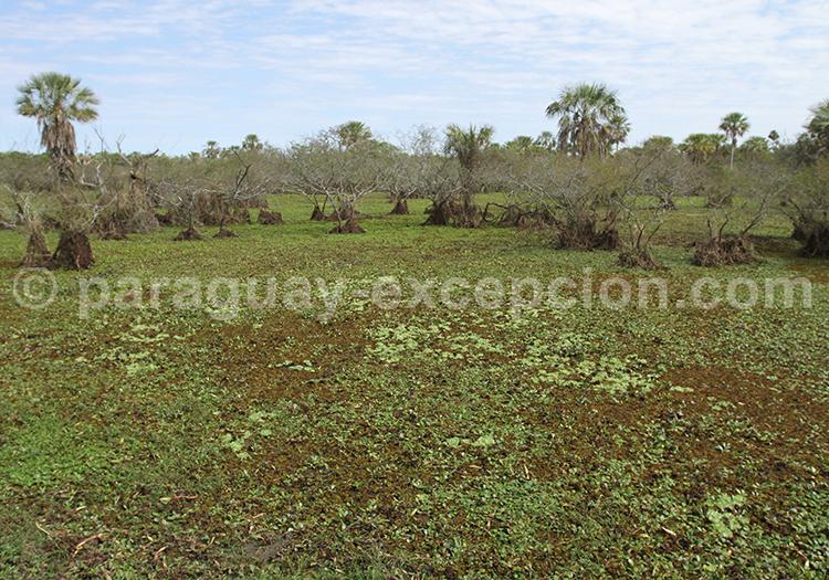 Ecosystèmes Chaco du Paraguay