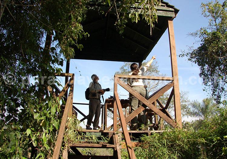 L'observation de la faune, parc Rio Negro