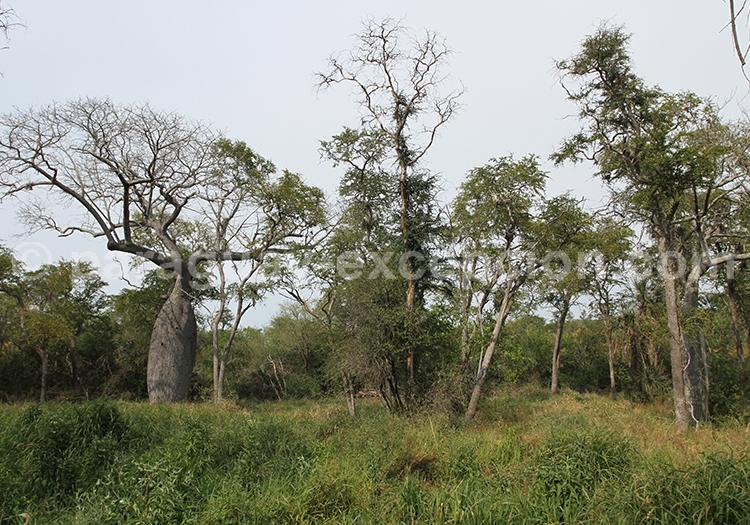 Safari photographique animalier Laguna Salada Paraguay