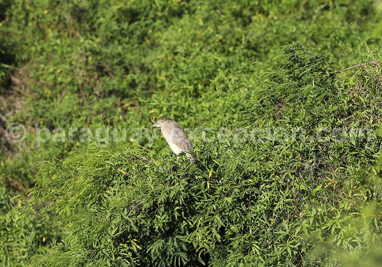 Faune aviaire parc national Rio Negro