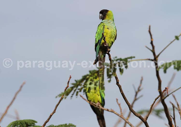 Oiseaux du parc Rio Negro, Chaco