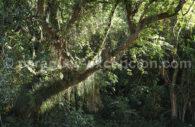 Parc national Rio Negro