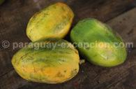 Mangue du Paraguay