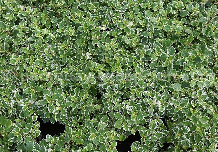 Les plantes vertes du Paraguay avec Paraguay Excepción