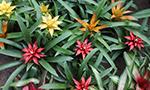Plantes du Paraguay, avec Paraguay Excepción