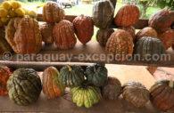 Courges du Paraguay