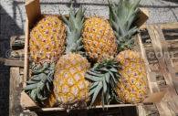 Ananas du Paraguay