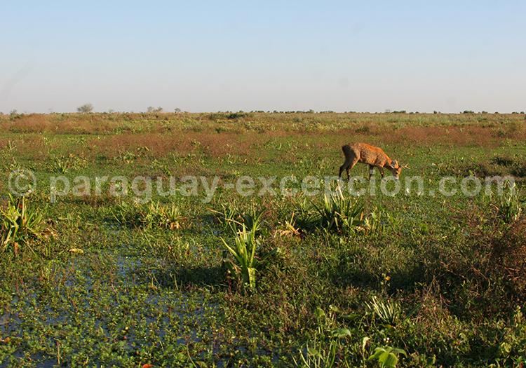 Safari dans le Gran Chaco