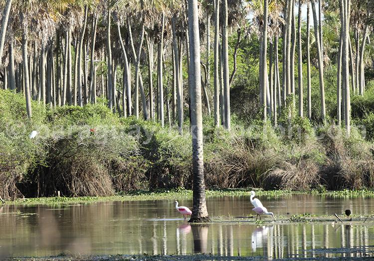 Voyage sur mesure Chaco Paraguay