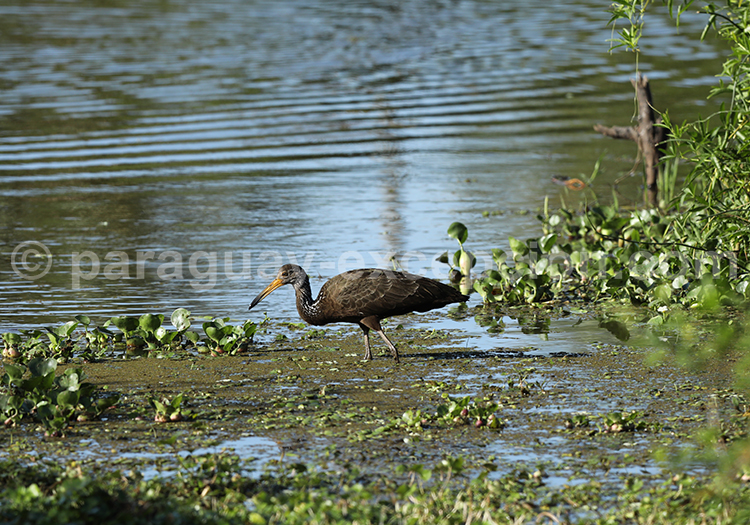 Safari photographique animalier parc Rio Negro