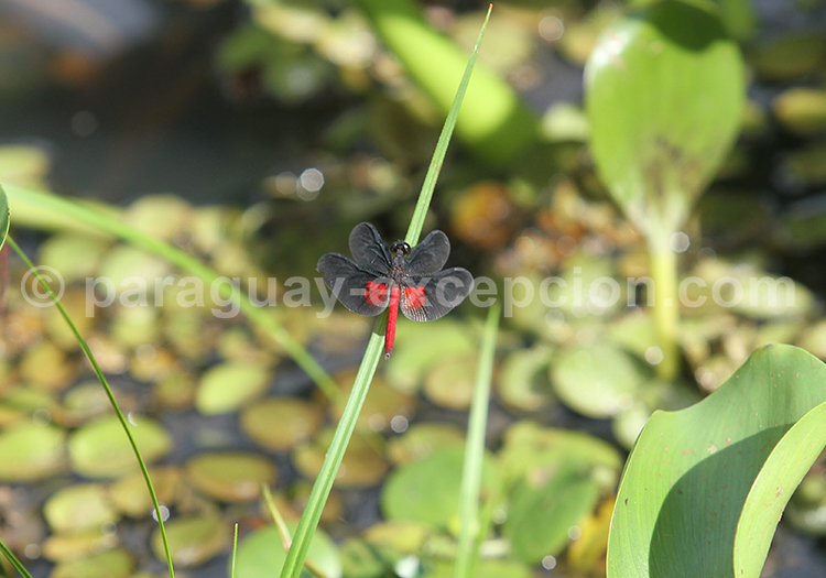 Ecosystèmes du Pantanal Paraguayen