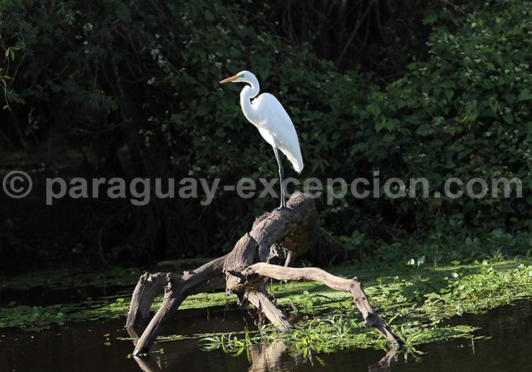Voyage photos parc Rio Negro, Paraguay