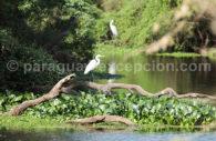 Aréas Silvestres Protegidas, Paraguay