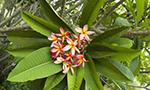 Flore du Paraguay
