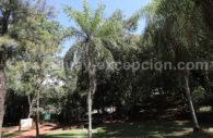 Mbokaja, palmier du Paraguay