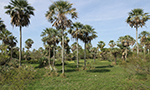 Parcs et réserves du Paraguay