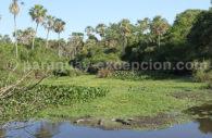 Tinfunqué, Paraguay