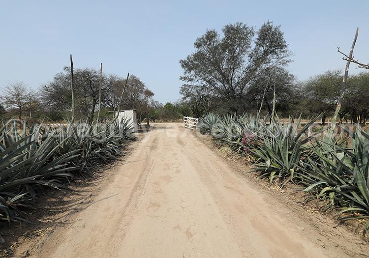 Projet Taguá, Fortin Toledo, Centre Chaqueño pour la Conservation et l'Investigation, Paraguay